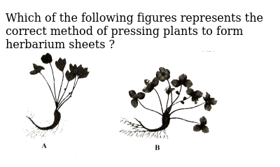 """Which of the following figures represents the correct method of pressing plants to form herbarium sheets ? <br> <img src=""""https://d10lpgp6xz60nq.cloudfront.net/physics_images/NCERT_FING_BIO_OBJ_XI_TLW_C01_E01_079_Q01.png"""" width=""""80%"""">"""
