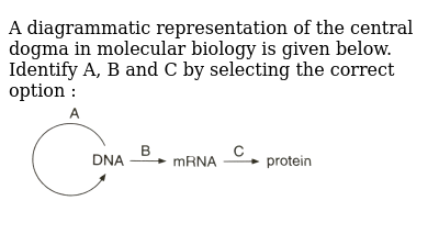 """A diagrammatic representation of the central dogma in molecular biology is given below. Identify A, B and C by selecting the correct option : <br> <img src=""""https://d10lpgp6xz60nq.cloudfront.net/physics_images/GRB_OBJ_BIO_IIND_C54_E01_196_Q01.png"""" width=""""80%"""">"""