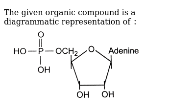 "The given organic compound is a diagrammatic representation of `:` <br> <img src=""https://d10lpgp6xz60nq.cloudfront.net/physics_images/GRB_OBJ_BIO_IIND_C52_E01_273_Q01.png"" width=""80%"">"