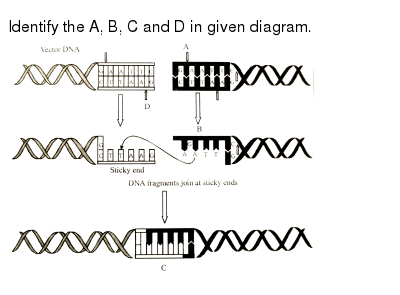 """Identify the A, B, C and D in given diagram. <br> <img src=""""https://d10lpgp6xz60nq.cloudfront.net/physics_images/ALN_NCR_BIO_XII_C09_E01_027_Q01.png"""" width=""""80%"""">"""