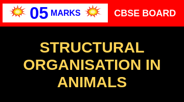 CBSE Board Class 11 STRUCTURAL ORGANISATION IN ANIMALS || Weightage and Important Topics