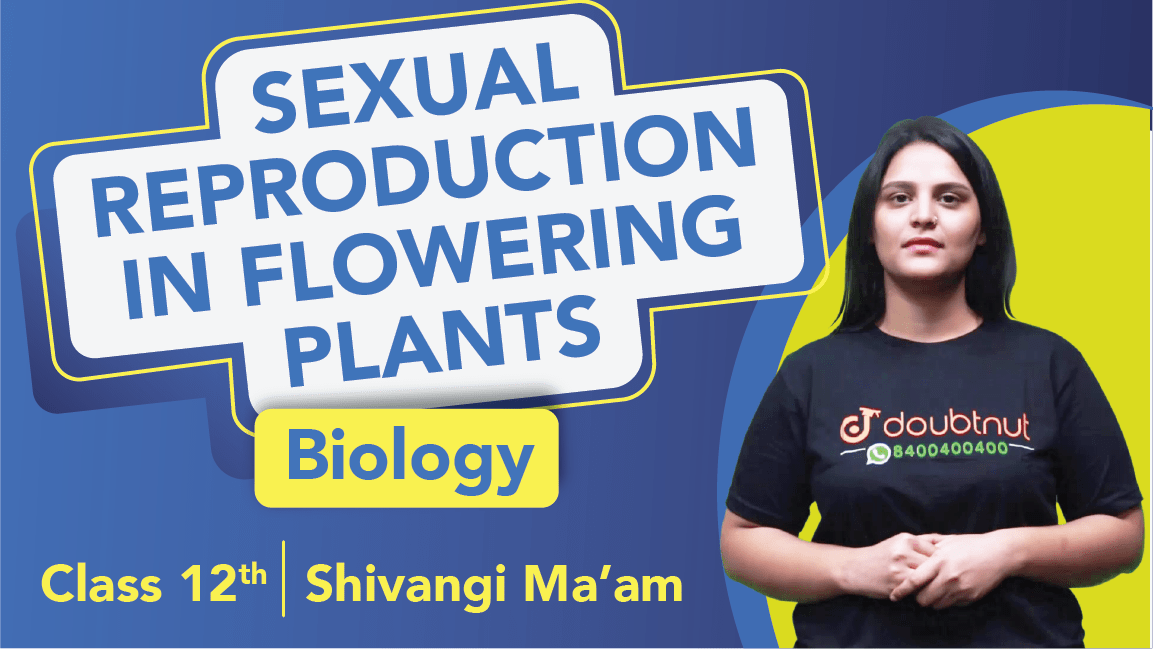 Class 12 Biology Chapter 2 | Sexual Reproduction in Flowering Plants| Important Questions & Revision