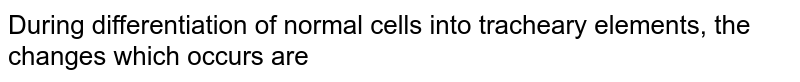 During differentiation of normal cells into tracheary elements, the changes which occurs are