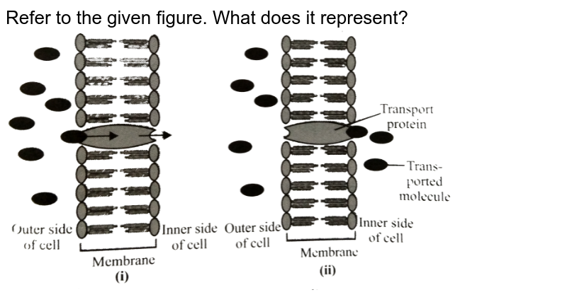 """Refer to the given figure. What does it represent? <br> <img src=""""https://d10lpgp6xz60nq.cloudfront.net/physics_images/NCERT_FING_BIO_OBJ_XI_TP_C11_E01_007_Q01.png"""" width=""""80%"""">"""