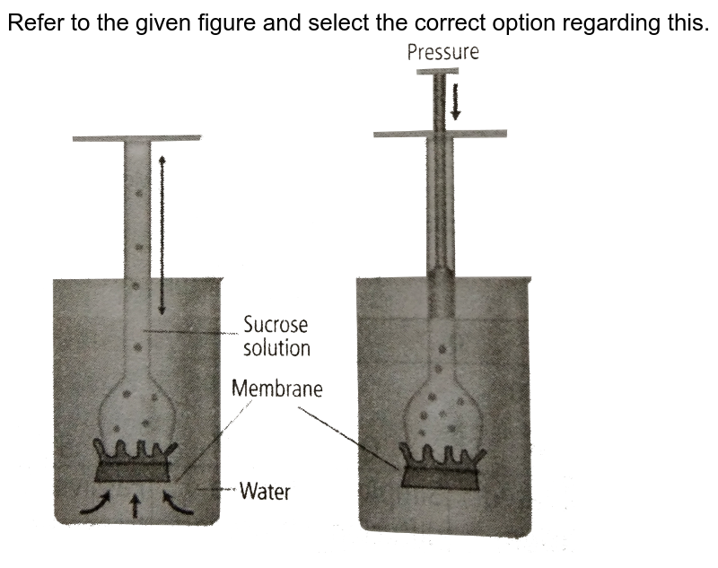 """Refer to the given figure and select the correct option regarding this. <br> <img src=""""https://d10lpgp6xz60nq.cloudfront.net/physics_images/NCERT_FING_BIO_OBJ_XI_TP_C11_E01_031_Q01.png"""" width=""""80%"""">"""