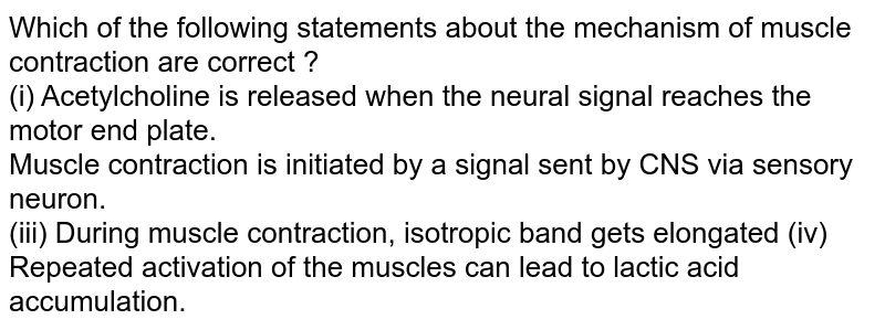 Which of the following statements about the mechanism of muscle contraction are correct ? <br> (i) Acetylcholine is released when the neural signal reaches the motor end plate. <br> Muscle contraction is initiated by a signal sent by CNS via sensory neuron. <br> (iii) During muscle contraction, isotropic band gets elongated (iv) Repeated activation of the muscles can lead to lactic acid accumulation.
