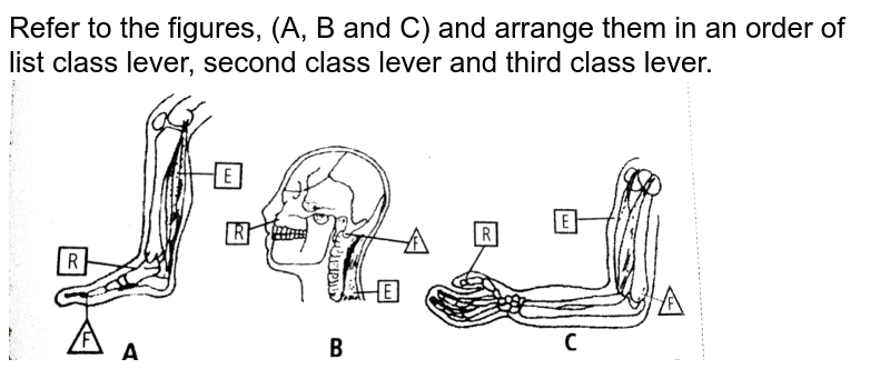 """Refer to the figures, (A, B and C) and arrange them in an order of list class lever, second class lever and third class lever. <br> <img src=""""https://d10lpgp6xz60nq.cloudfront.net/physics_images/NCERT_FING_BIO_OBJ_XI_LAM_C20_E01_107_Q01.png"""" width=""""80%"""">"""
