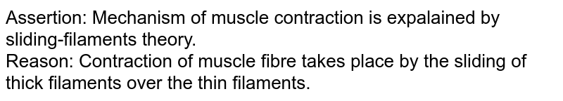 Assertion: Mechanism of muscle contraction  is expalained by sliding-filaments theory. <br> Reason: Contraction of muscle fibre takes place by the sliding of thick filaments over the thin filaments.