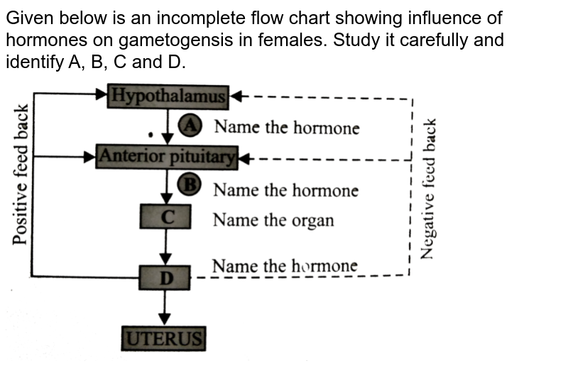 """Given below is an incomplete flow chart showing influence of hormones on  gametogensis in females. Study it carefully and identify A, B, C and D. <br> <img src=""""https://d10lpgp6xz60nq.cloudfront.net/physics_images/NCERT_FING_BIO_OBJ_XII_HR_C03_E01_067_Q01.png"""" width=""""80%"""">"""