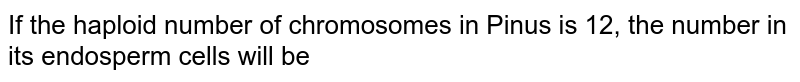 If the haploid number of chromosomes in Pinus is 12, the number in its endosperm cells will be
