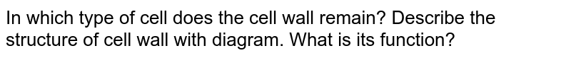In which type of cell does the cell wall remain? Describe the structure of cell wall with diagram. What is its function?