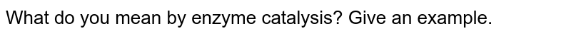 What do you mean by enzyme catalysis? Give an example.