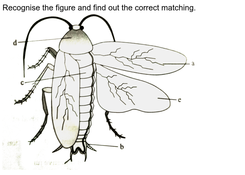 """Recognise the figure and find out the correct matching.  <br>  <img src=""""https://d10lpgp6xz60nq.cloudfront.net/physics_images/A2Z_BIO_XI_C07_E01_068_Q01.png"""" width=""""80%"""">"""