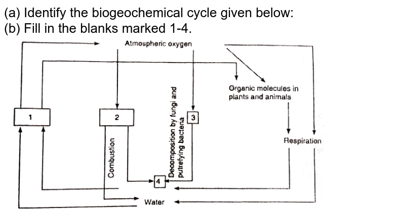 """(a) Identify the biogeochemical cycle given below: <br> (b) Fill in the blanks marked 1-4. <br>  <img src=""""https://d10lpgp6xz60nq.cloudfront.net/physics_images/NCERT_BIO_IX_C06_E01_103_Q01.png"""" width=""""80%"""">"""