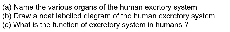 (a) Name the various organs of the human excrtory system <br> (b) Draw a neat labelled diagram of the human excretory system <br> (c) What is the function of excretory system in humans ?