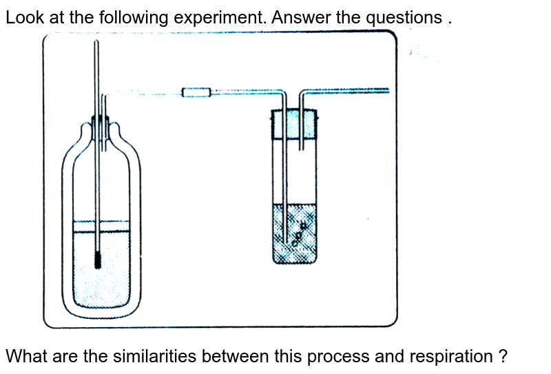 """Look at the following experiment. Answer the questions . <br> <img src=""""https://d10lpgp6xz60nq.cloudfront.net/physics_images/BRS_QB_BIO_X_C02_E06_263_Q01.png"""" width=""""80%""""> <br> What are the similarities between this process and respiration ?"""