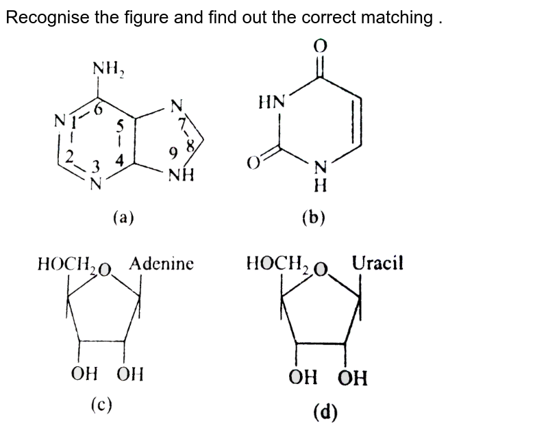 """Recognise the figure and find out the correct matching .  <br> <img src=""""https://d10lpgp6xz60nq.cloudfront.net/physics_images/A2Z_BIO_XI_C09_E01_010_Q01.png"""" width=""""80%"""">"""