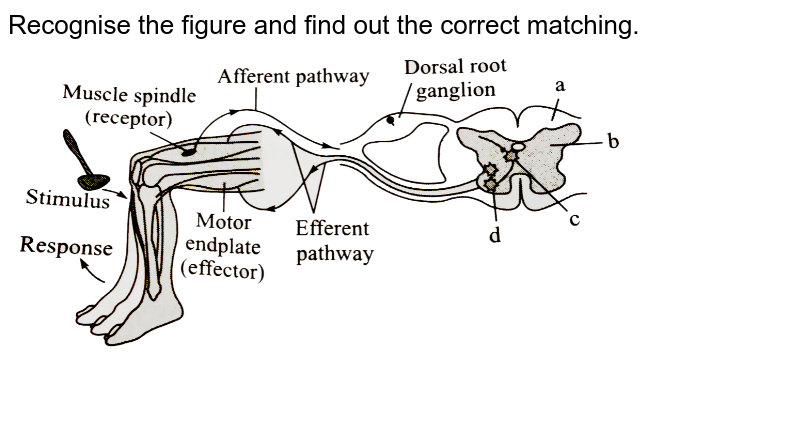 """Recognise the figure and find out the correct matching. <br> <img src=""""https://d10lpgp6xz60nq.cloudfront.net/physics_images/A2Z_BIO_XI_C21_E01_130_Q01.png"""" width=""""80%"""">"""
