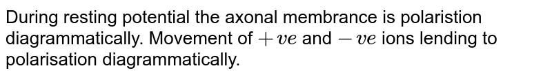 During  resting potential the axonal membrance is polaristion diagrammatically. Movement  of `+ve` and `-ve` ions lending  to polarisation  diagrammatically.