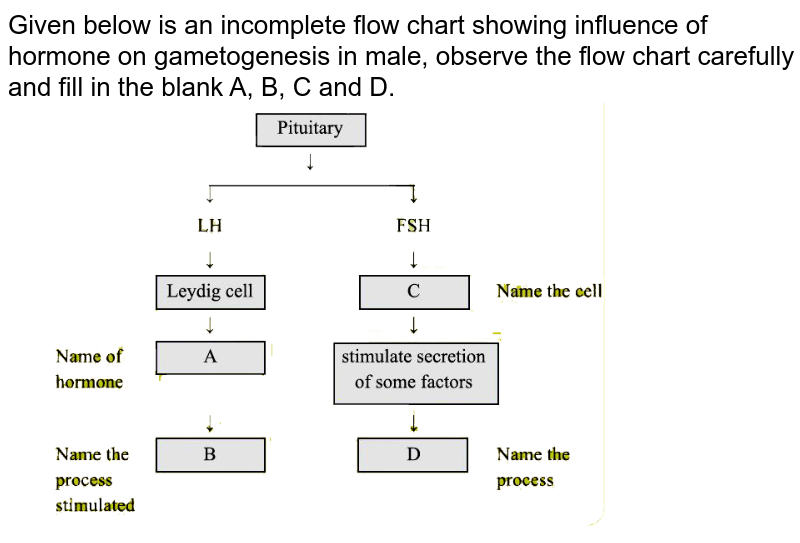 """Given below is an incomplete flow chart showing influence of hormone on gametogenesis in male, observe the flow chart carefully and fill in the blank A, B, C and D.<br> <img src=""""https://d10lpgp6xz60nq.cloudfront.net/physics_images/DBT_SM_BIO_XII_C03_E02_002_Q01.png"""" width=""""80%"""">"""