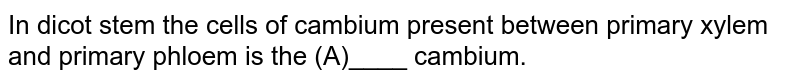In dicot stem the cells of cambium present between primary xylem and primary phloem is the (A)____ cambium.