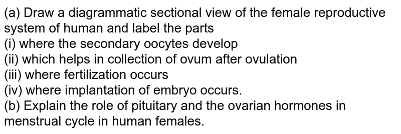 (a) Draw a diagrammatic sectional view of the female reproductive system of human and label the parts <br> (i) where the secondary oocytes develop <br> (ii) which helps in collection of ovum after ovulation <br> (iii) where fertilization occurs <br> (iv) where implantation of embryo occurs. <br> (b) Explain the role of pituitary and the ovarian hormones in menstrual cycle in human females.