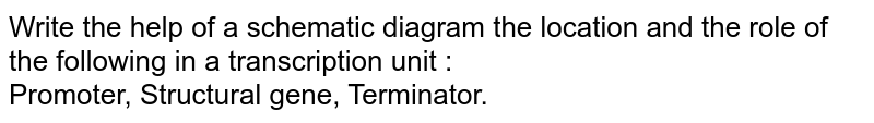 Write the help of a schematic diagram the location and the role of the following in a transcription unit : <br> Promoter, Structural gene, Terminator.