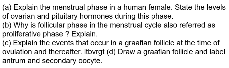 (a) Explain the menstrual phase in a human female. State the levels of ovarian and pituitary hormones during this phase. <br> (b) Why is follicular phase in the menstrual cycle also referred as proliferative phase ? Explain. <br> (c) Explain the events that occur in a graafian follicle at the time of ovulation and thereafter. ltbvrgt (d) Draw a graafian follicle and label antrum and secondary oocyte.