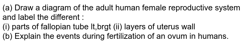 (a) Draw a diagram of the adult human female reproductive system and label the different : <br> (i) parts of fallopian tube lt,brgt (ii) layers of uterus wall <br> (b) Explain the events during fertilization  of an ovum in humans.