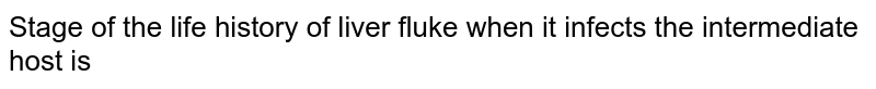 Stage of the life history of liver fluke when it infects the intermediate host is