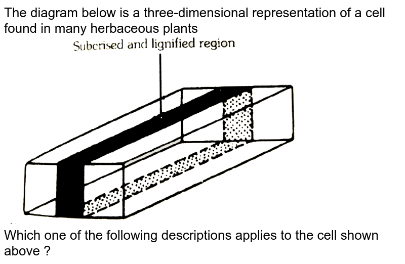 """The diagram below is a three-dimensional representation of a cell found in many herbaceous plants <br> <img src=""""https://d10lpgp6xz60nq.cloudfront.net/physics_images/ALN_BIO_C06_E11_033_Q01.png"""" width=""""80%""""> <br>  Which one of the following descriptions applies to the cell shown above ?"""