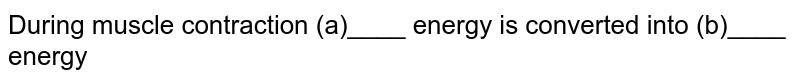 During muscle contraction (a)____ energy is converted into (b)____ energy
