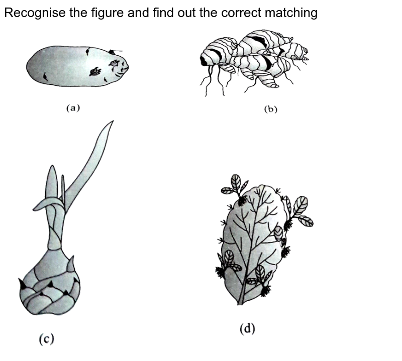 """Recognise the figure and find out the correct matching <br> <img src=""""https://d10lpgp6xz60nq.cloudfront.net/physics_images/A2Z_BIO_XII_C01_E01_014_Q01.png"""" width=""""80%"""">"""