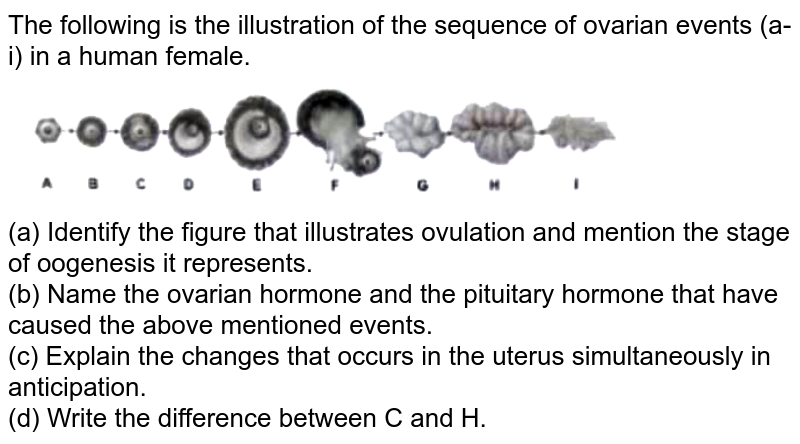 """The following is the illustration of the sequence of ovarian events (a-i) in a human female. <br> <img src=""""https://d10lpgp6xz60nq.cloudfront.net/physics_images/FM_BIO_ZOO_XII_C02_E01_035_S01.png"""" width=""""80%""""> <br> (a) Identify the figure that illustrates ovulation and mention the stage of oogenesis it represents. <br> (b) Name the ovarian hormone and the pituitary hormone that have caused the above mentioned events. <br>  (c) Explain the changes that occurs in the uterus simultaneously in anticipation. <br>  (d) Write the difference between C and H."""