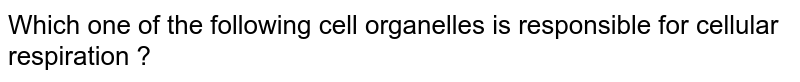 Which one of the  following  cell organelles is responsible  for cellular  respiration ?