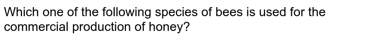 Which one of the following species of bees is used for the commercial production of honey?
