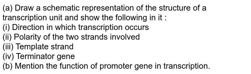 (a) Draw a schematic representation of the structure of a transcription unit and show the following in it : <br> (i) Direction in which transcription occurs <br> (ii) Polarity of the two strands involved <br> (iii) Template strand <br> (iv) Terminator gene <br> (b) Mention the function of promoter gene in transcription.