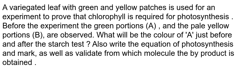 A variegated leaf with green and yellow patches is used for an experiment  to prove that  chlorophyll is required for photosynthesis . Before the  experiment  the green portions (A) , and the pale yellow portions (B), are observed. What will be the colour of 'A' just  before and after  the starch test ? Also write the equation of photosynthesis  and mark, as well as validate from which molecule  the by product is obtained .