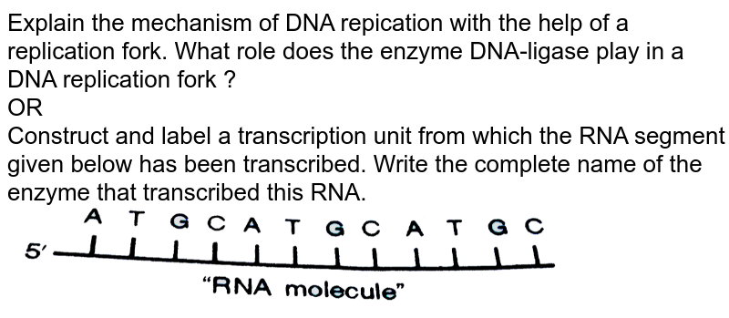 """Explain the mechanism of DNA repication with the help of a replication fork. What role does the enzyme DNA-ligase play in a DNA replication fork ? <br> OR <br> Construct and label a transcription unit from which the RNA segment given below has been transcribed. Write the complete name of the enzyme that transcribed this RNA. <br> <img src=""""https://d10lpgp6xz60nq.cloudfront.net/physics_images/SB_BIO_XII_SET_III_2019_E01_016_Q01.png"""" width=""""80%"""">"""