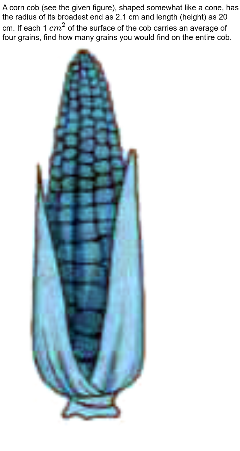 """A corn cob (see the given figure), shaped somewhat like a cone, has the radius of its broadest end as 2.1 cm and length (height) as 20 cm. If each 1 `cm^(2)` of the surface of the cob carries an average of four grains, find how many grains you would find on the entire cob. <br> <img src=""""https://doubtnut-static.s.llnwi.net/static/physics_images/NVT_MAT_IX_C13_E01_006_Q01.png"""" width=""""80%"""">"""