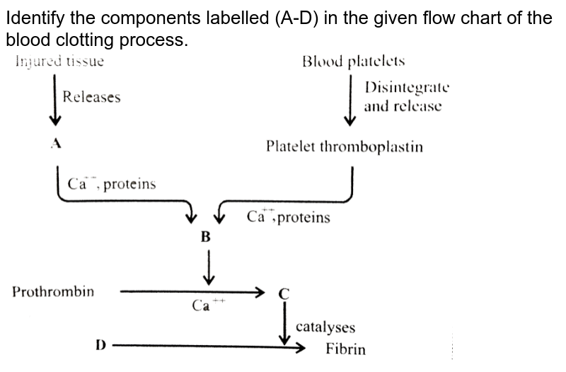 """Identify the components labelled (A-D) in the given flow chart of the blood clotting process. <br> <img src=""""https://d10lpgp6xz60nq.cloudfront.net/physics_images/NCERT_FIN_BIO_OBJ_XI_BFC_C18_E01_033_Q01.png"""" width=""""80%"""">"""