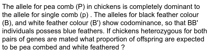 To allele for pea comb (P) in chickens is completely dominant to the allele for single comb (p) . The alleles for black feature colour (B), and white feature colour (B') show  codominance, so that BB' individuals possess blue features. If thickness heterozygous for both pairs of genes are matedm what proportion of offspring are expected to  be pea  combed and white feathered ?