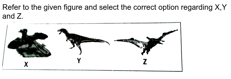 """Refer to the given figure and select the correct option regarding X,Y and Z. <br> <img src=""""https://d10lpgp6xz60nq.cloudfront.net/physics_images/NCERT_FING_BIO_OBJ_XII_EVO_C07_E01_027_Q01.png"""" width=""""80%"""">"""