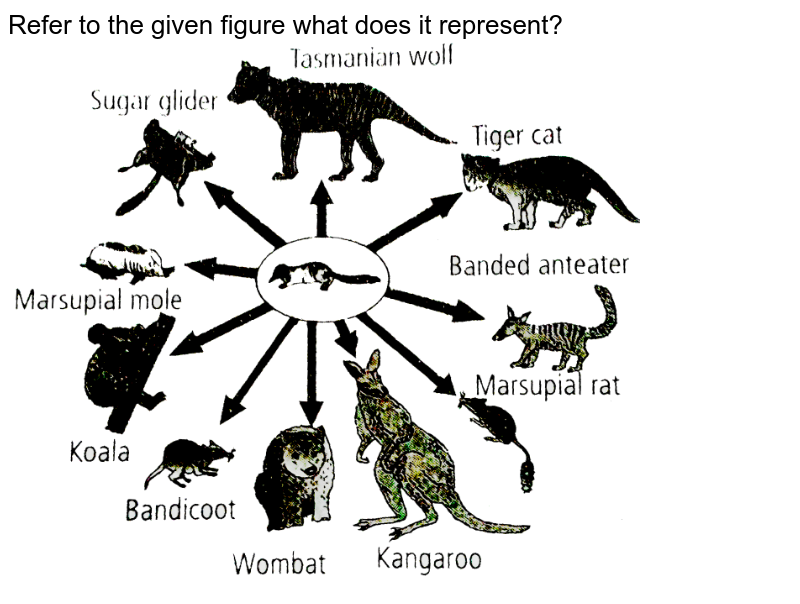 """Refer to the given figure what does it represent? <br> <img src=""""https://d10lpgp6xz60nq.cloudfront.net/physics_images/NCERT_FING_BIO_OBJ_XII_EVO_C07_E01_046_Q01.png"""" width=""""80%"""">"""