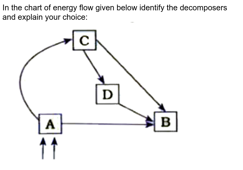 """In the chart of energy flow given below identify the decomposers and explain your choice: <br> <img src=""""https://doubtnut-static.s.llnwi.net/static/physics_images/NVT_SCI_X_BIO_P2_C15_E04_058_Q01.png"""" width=""""80%"""">"""
