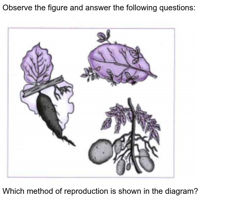 """Observe the figure and answer the following questions: <br> <img src=""""https://doubtnut-static.s.llnwi.net/static/physics_images/CHT_MK_SCI_X_P2_C03_E18_001_Q01.png"""" width=""""80%""""> <br> Which method of reproduction is shown in the diagram?"""