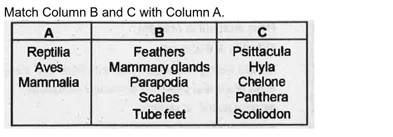 """Match Column B and C with Column A.<br><img src=""""https://doubtnut-static.s.llnwi.net/static/physics_images/EXP_VAD_ZOO_10_XI_C02_E04_004_Q01.png"""" width=""""80%"""">"""