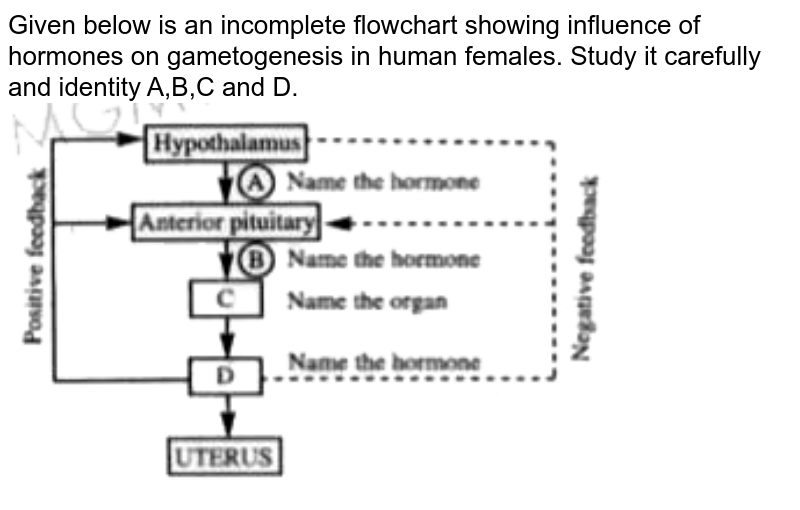 """Given below is an incomplete flowchart showing influence of hormones on gametogenesis in human females. Study it carefully and identity A,B,C and D. <br> <img src=""""https://doubtnut-static.s.llnwi.net/static/physics_images/AKS_NEET_OBJ_BIO_XI_V01_B_C13_E02_010_Q01.png"""" width=""""80%"""">"""