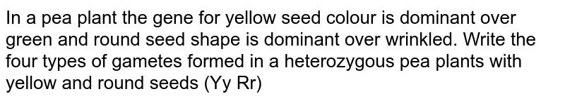 In a pea plant the gene for yellow seed colour is dominant over green and round seed shape is dominant over wrinkled. Write the four types of gametes formed in a heterozygous pea plants with yellow and round seeds (Yy Rr)