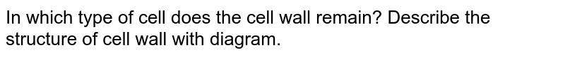 In which type of cell does the cell wall remain? Describe the structure of cell wall with diagram.